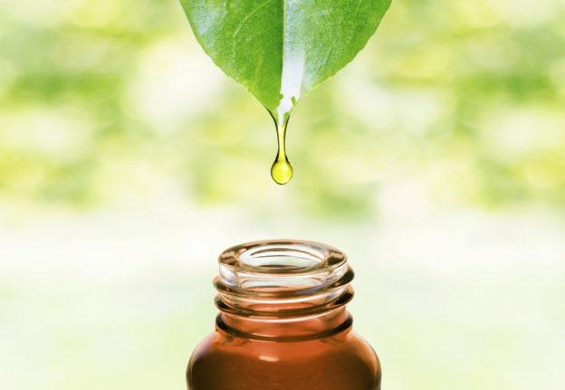 Benefits of tea tree oil for hair growth