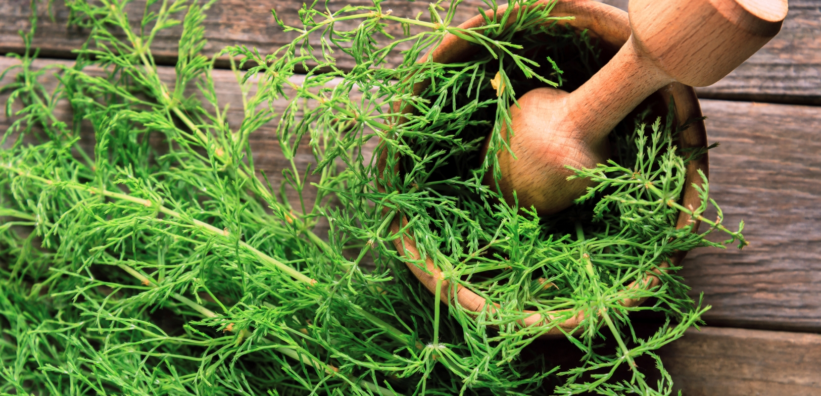 Horsetail herb extract, silica for hair growth