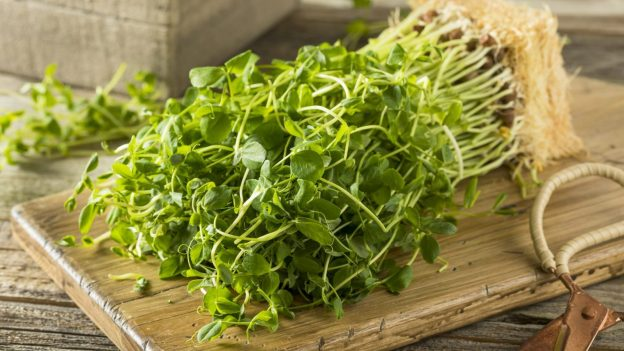 Pea Sprouts for Healthy Hair